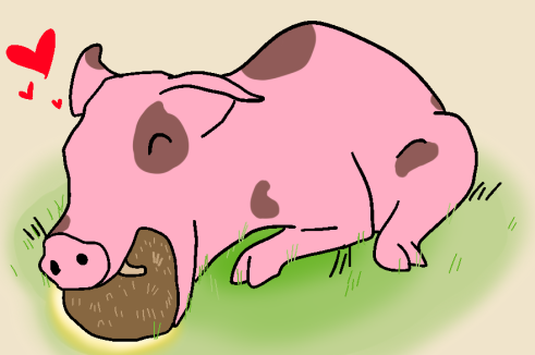 lovepig