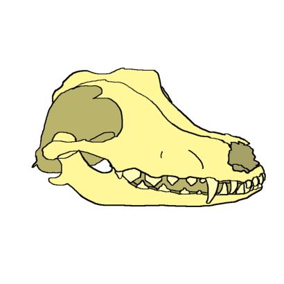 dog_skull